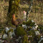 Les poulettes en vadrouille